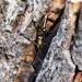 Micro moths