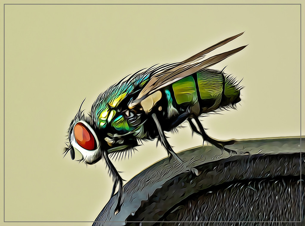 An irritating fly sitting on my pc! by ludwigsdiana