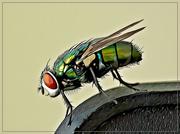 18th Apr 2019 - An irritating fly sitting on my pc!