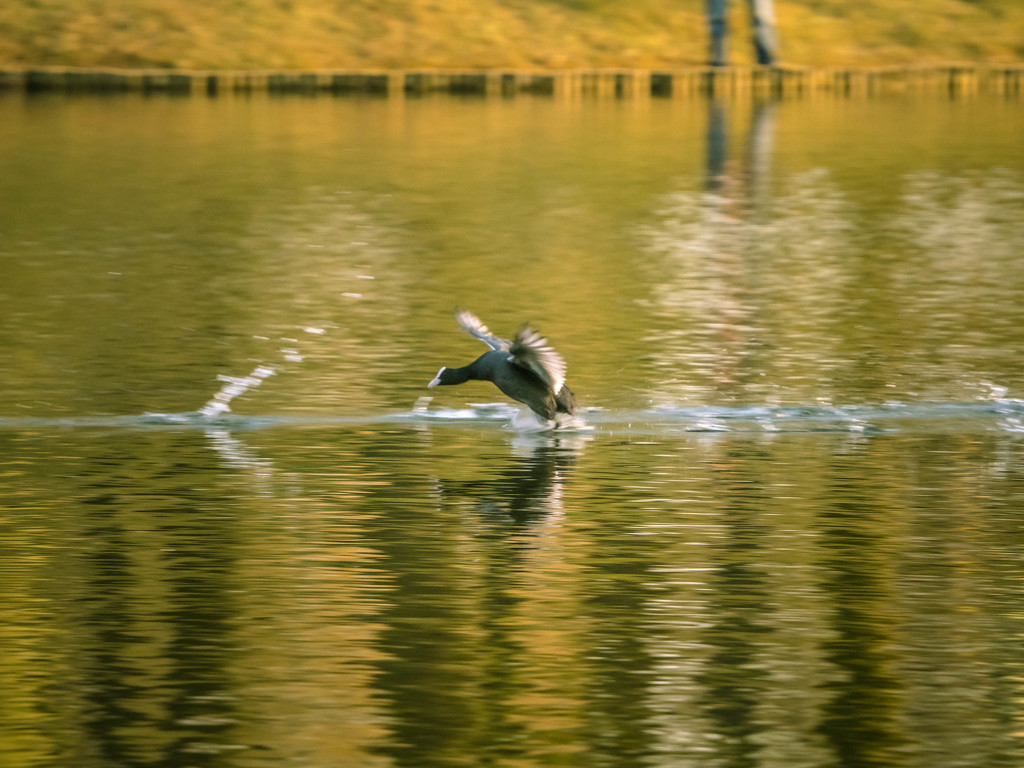 Running on the water by haskar