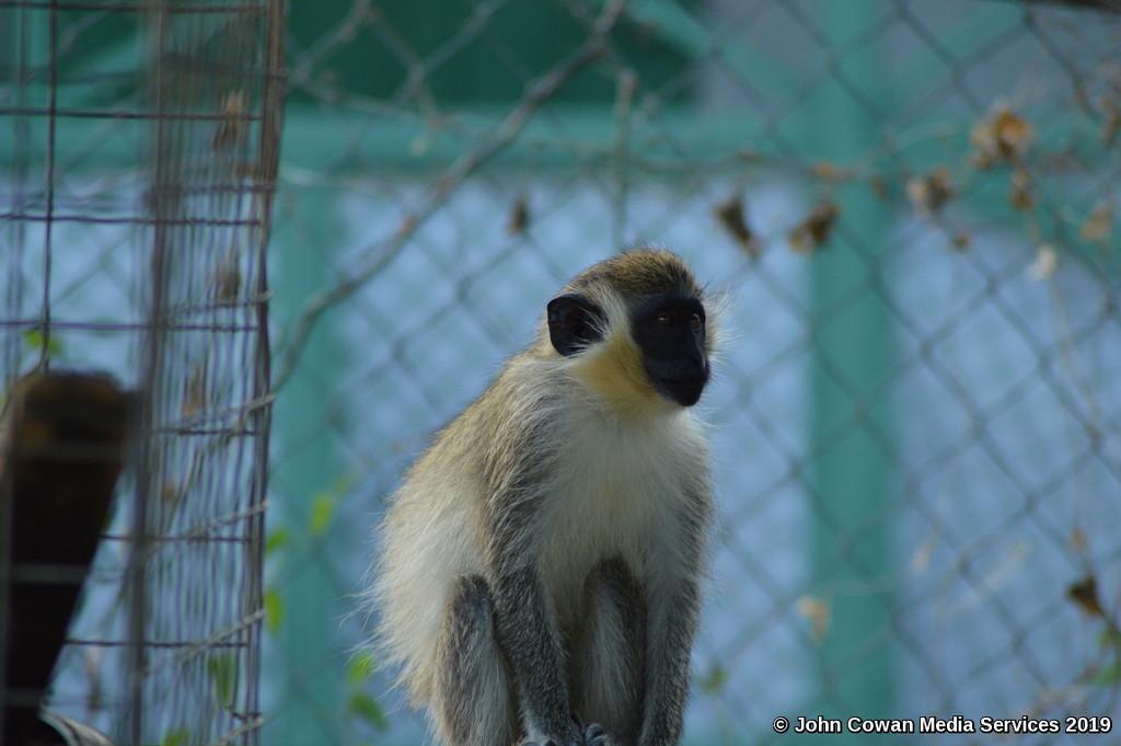 Monkey by motorsports