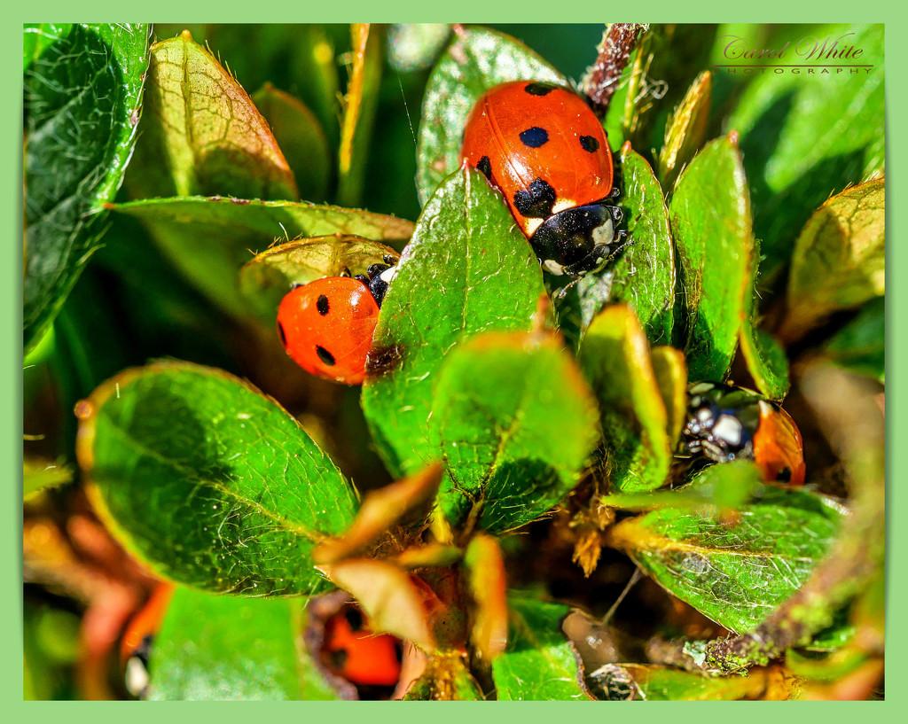 Gardeners' Little Friends by carolmw