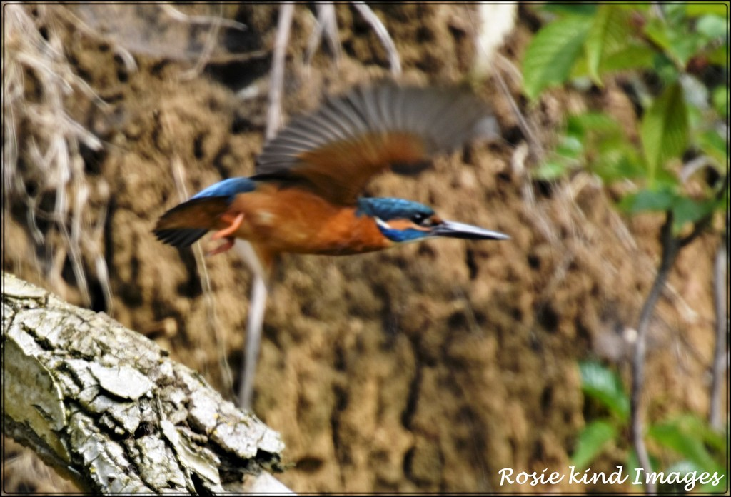 The elusive little bird by rosiekind