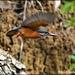 The elusive little bird