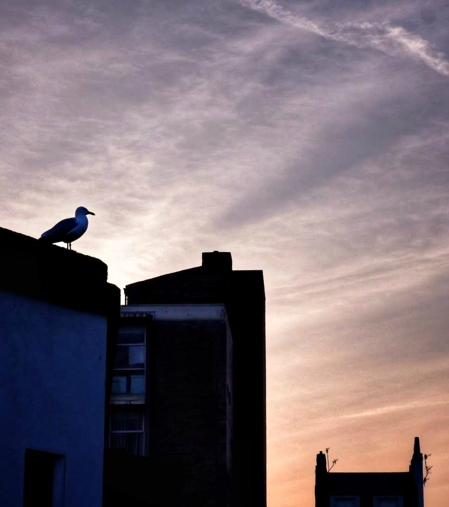 Seagull silhouette by 4rky