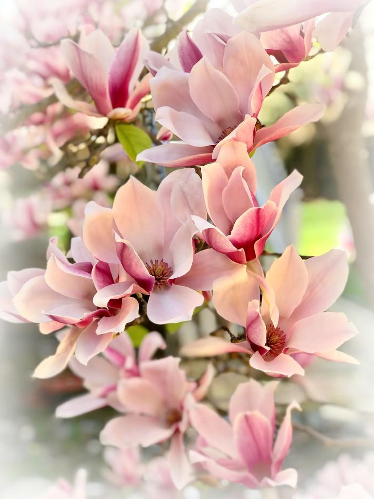 Bloom As If by gardenfolk