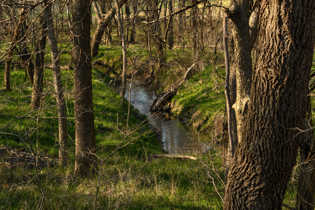 Forest Creek by kareenking