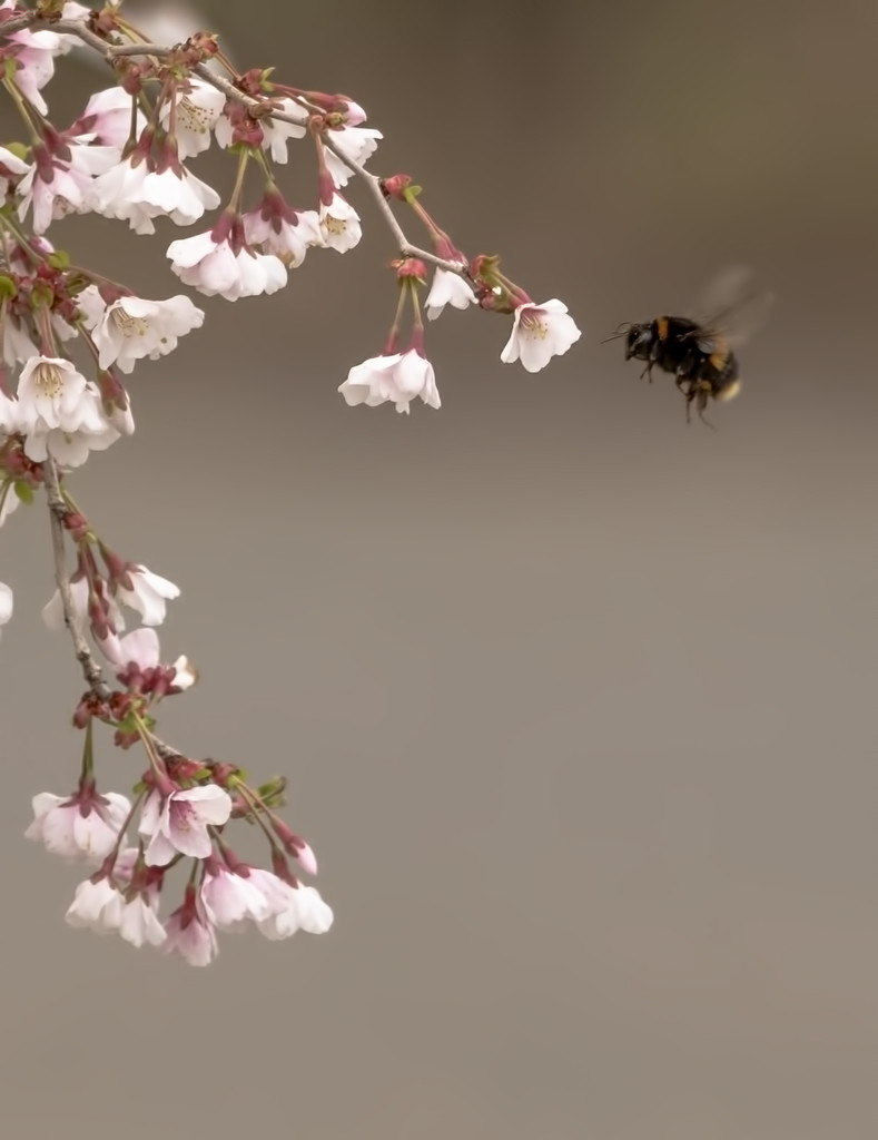 Bee and Blossom by shepherdmanswife