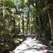 The edge of the Amazon jungle