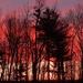 Y10 D108 Sunrise