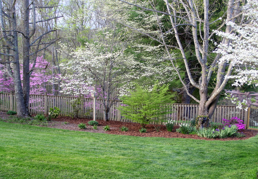 Spring in the Backyard by calm