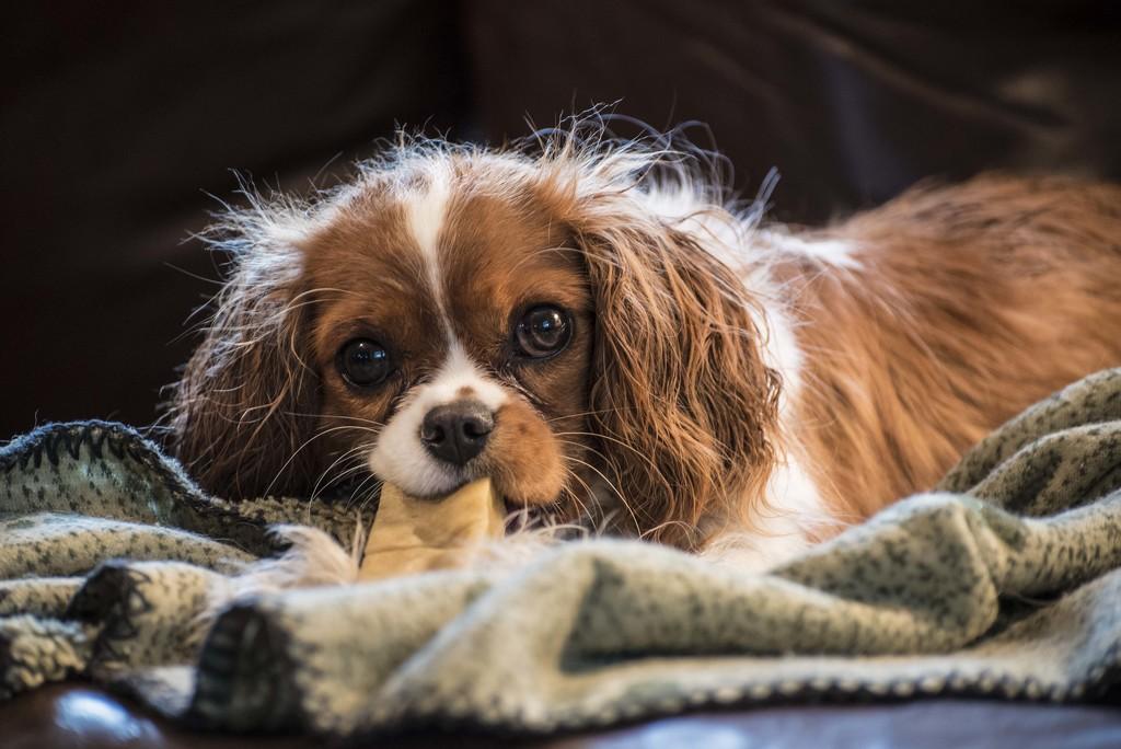 Stinkin'  Cute Wet Dog with Bone by dfarrington