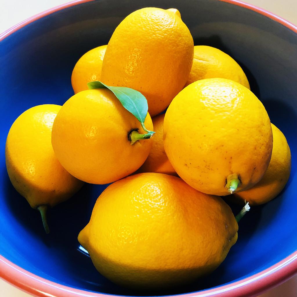 My Meyer Lemons Gift by yogiw