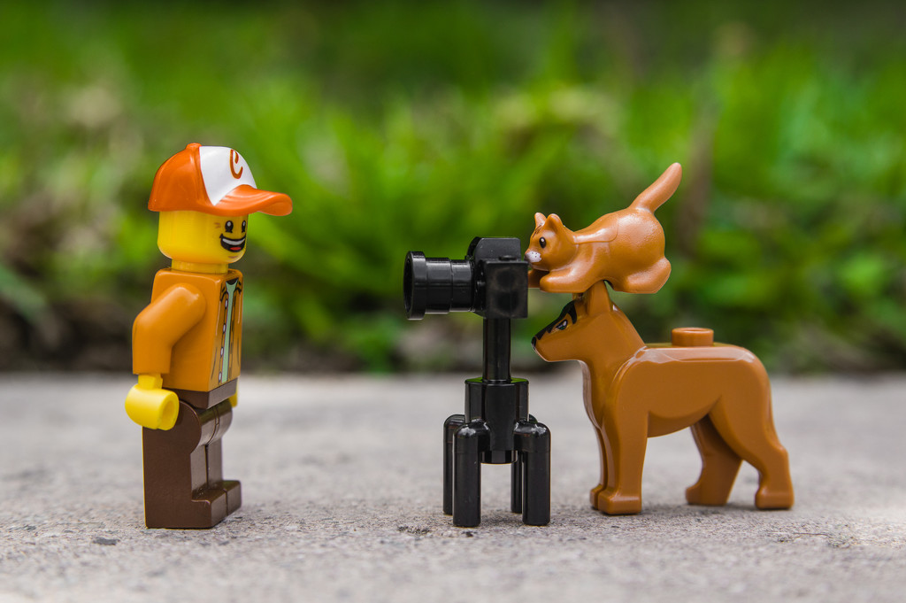 (Day 63) - Pet Photographers by cjphoto