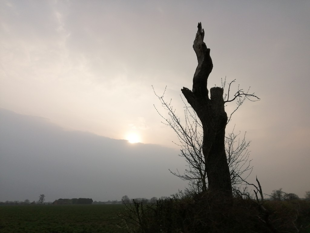 Dead tree sunset by dragey74