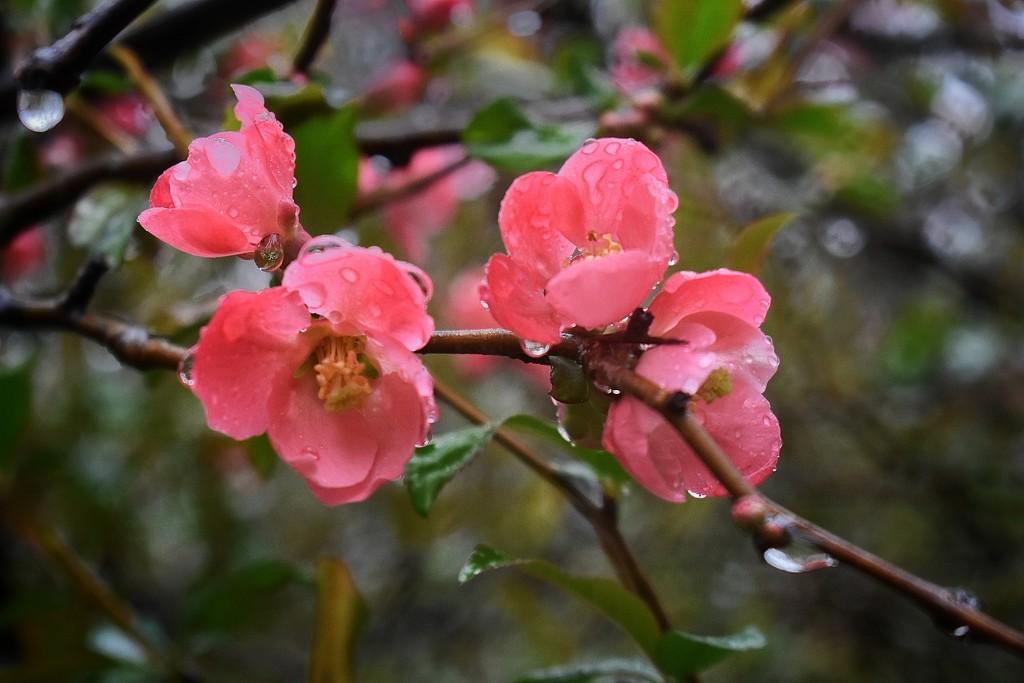 Pretty in Pink by yentlski