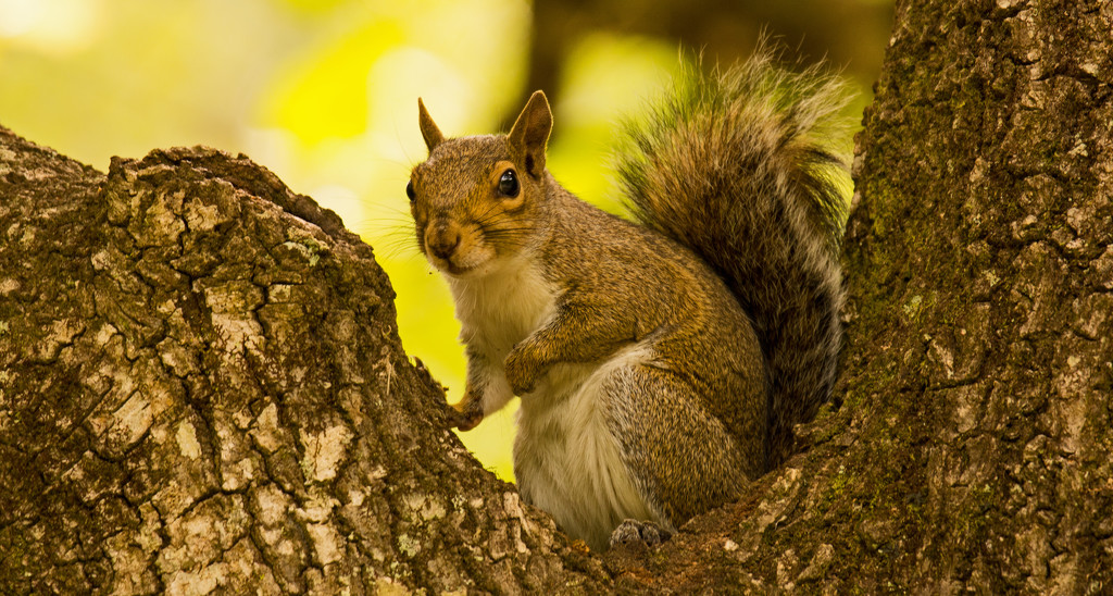 Mr Squirrel in His Safe Spot! by rickster549