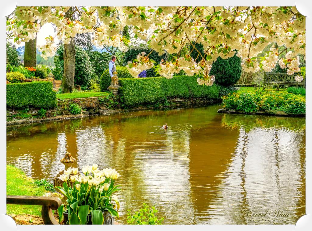 Coton Manor Gardens by carolmw