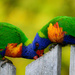 Thanks for eating my fence! by gigiflower
