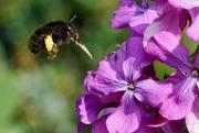 18th Apr 2019 - INBOUND BEE
