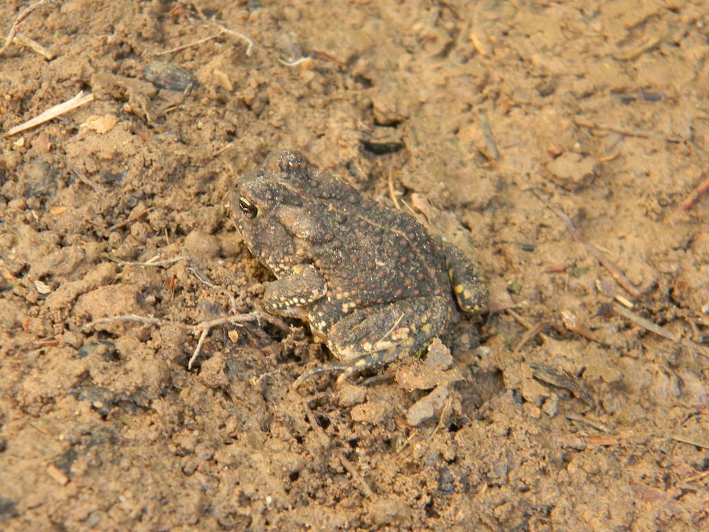 Toad Under Basketball Court by sfeldphotos