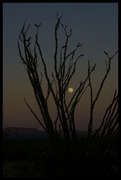 19th Apr 2019 - Ocotillo Moon