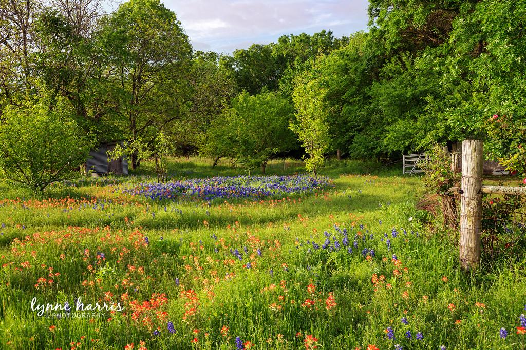 Heaven's Meadow by lynne5477