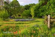 19th Apr 2019 - Heaven's Meadow