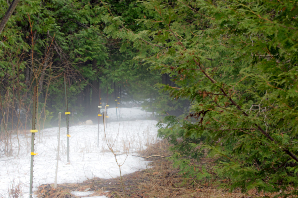 April Words - Mist or Fog by farmreporter
