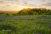 15th Apr 2019 - Bluebonnet Sunrise