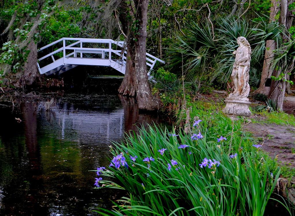 Irises, Magnolia Gardens by congaree