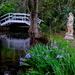 Irises, Magnolia Gardens