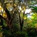 Woodland scene, Magnolia Gardens
