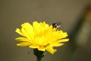 19th Apr 2019 - yellow flower