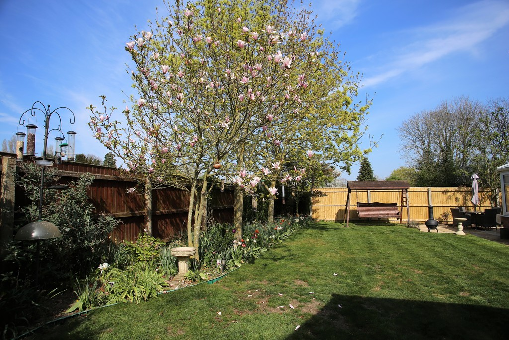 My Garden April 2019 by phil_sandford