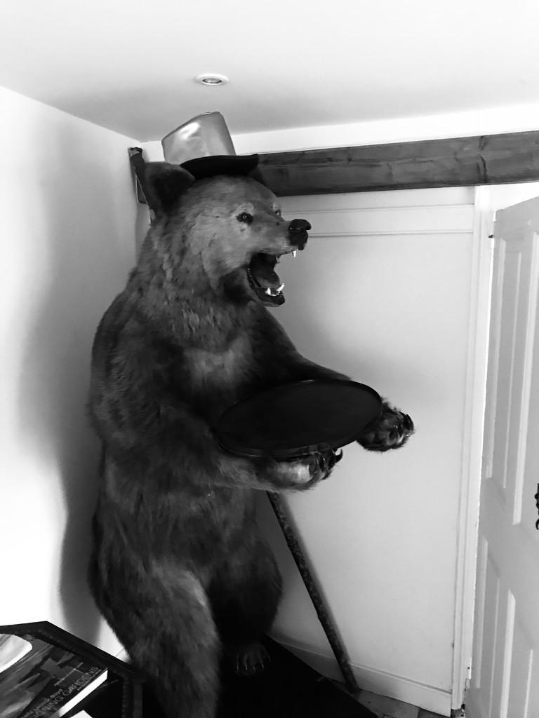 bear.... Bear... BEAR!!! by wincho84