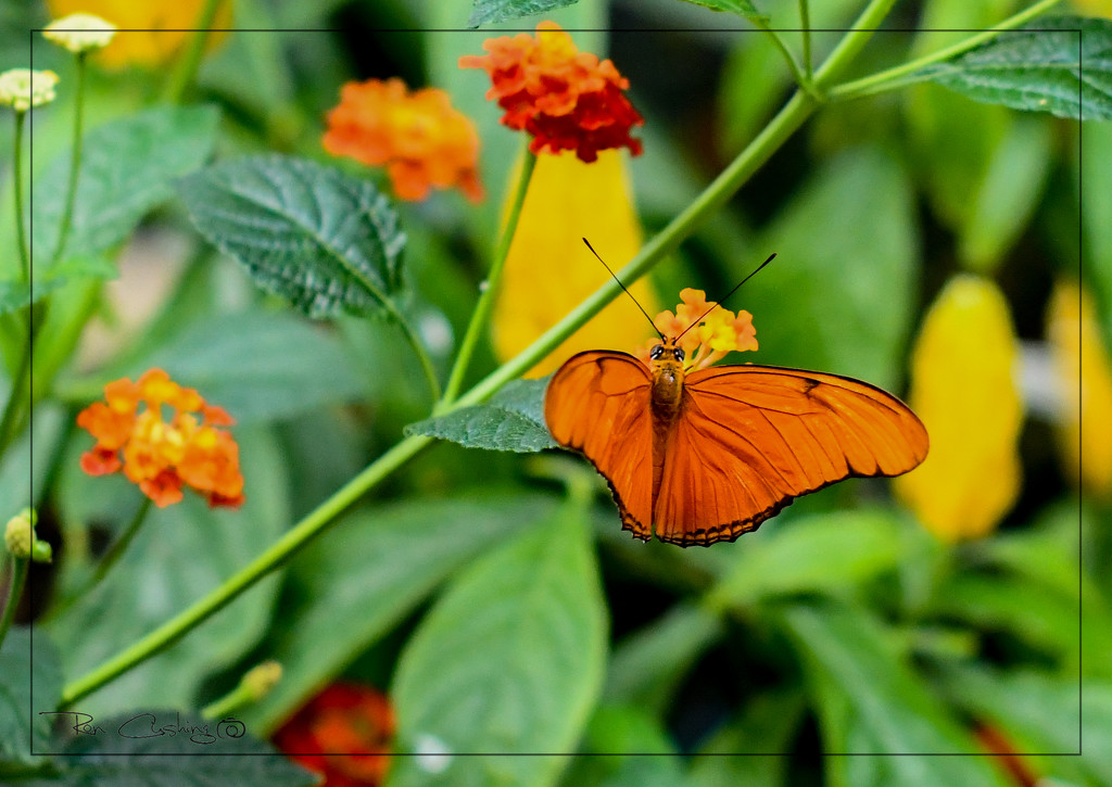 Butterfly Feast by stray_shooter