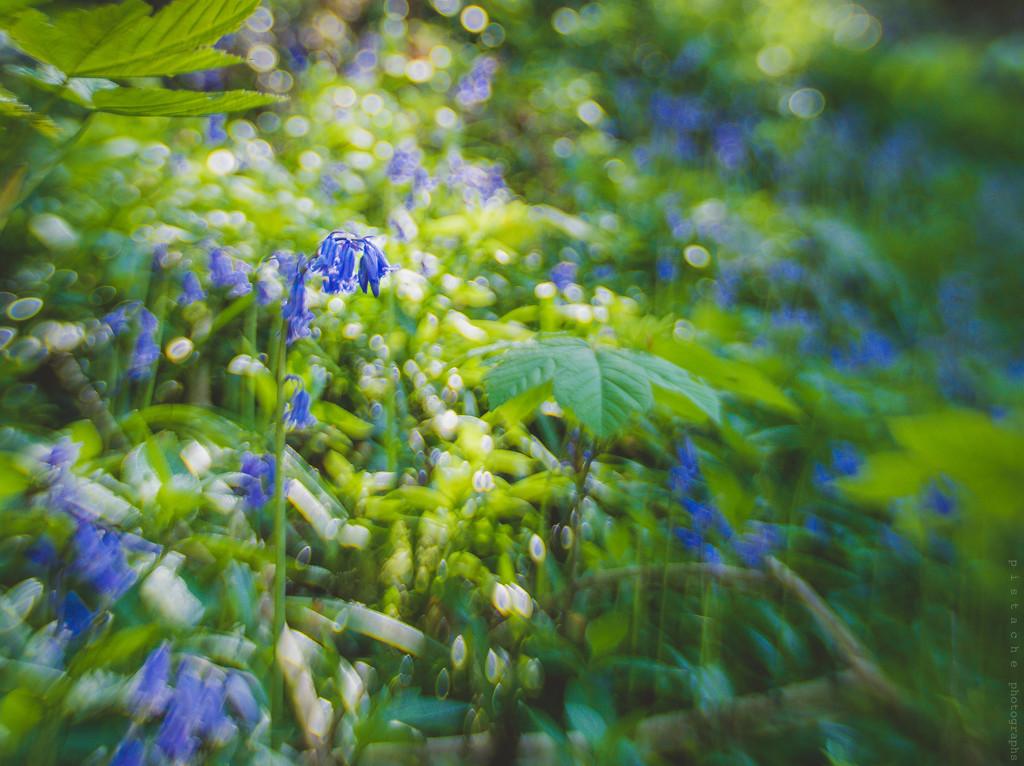 bells of blue by pistache