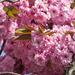 Blossom by craftymeg