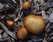 23rd Apr 2019 - Mushrooms ~