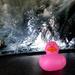 Scrub-a-dub Duck