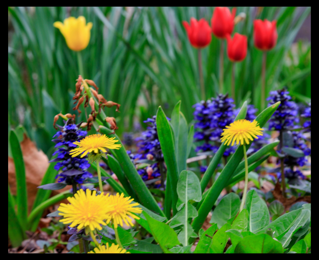 Colours of Spring by hjbenson
