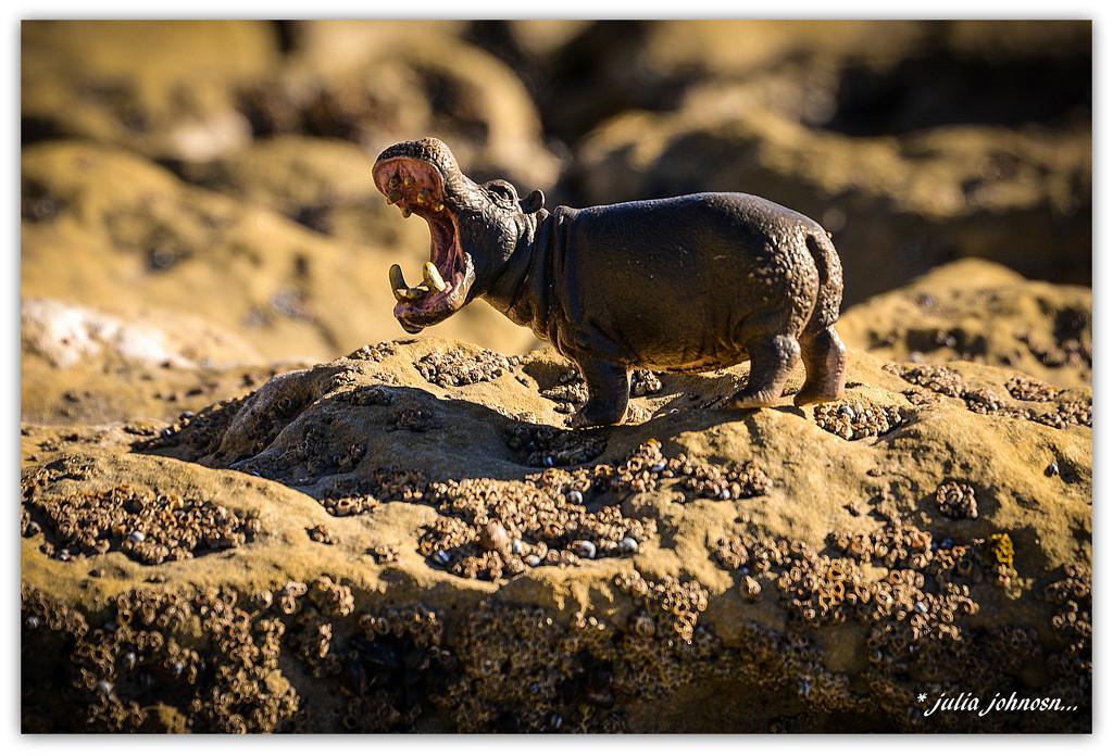Hippo at the Port... by julzmaioro