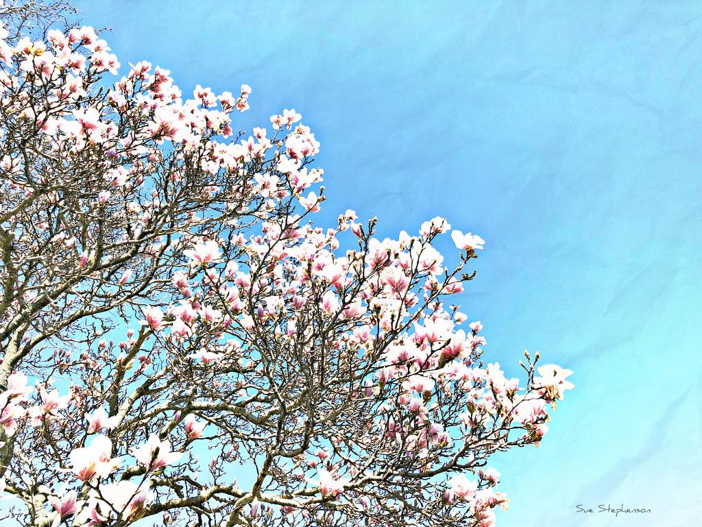 Magnolia Sky by Swazzette