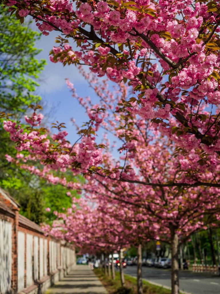 Spring street by haskar