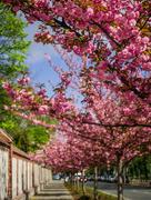 22nd Apr 2019 - Spring street