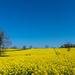 Bright Yellow v2