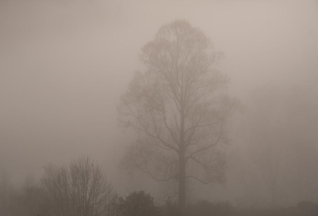 Tree in Fog by kareenking