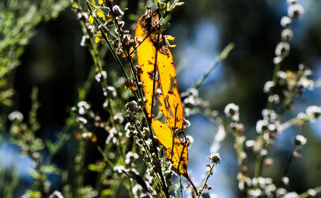 Autumn leaves #1 by gigiflower