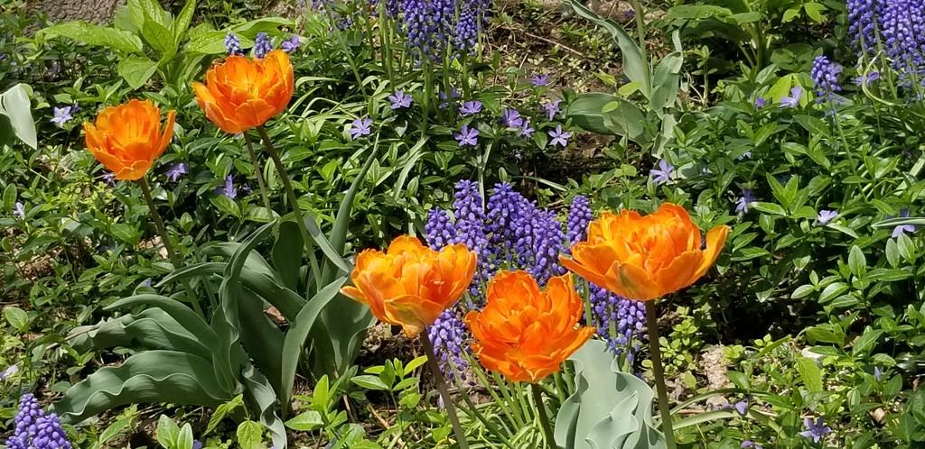 Spring colors by dfarrington